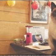 浅草 喫茶店 若生 : 【猫カフェ以外】看板猫に会える都内の居酒屋カフェ飲食店【猫と一緒に】 - NAVER まとめ