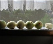 太陽たまねぎは栄養が4倍! | チェリーズマム通信