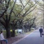 """寄 on Twitter: """"ペテロの葬列の最後の方の、銀杏並木を歩く杉村がベンチに座る間野を見つける場面。仮面ライダー剣では、始が剣崎の幻を見た場所でもある。ちょっと思い出してしんみり..."""