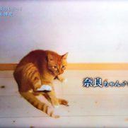 藤原博史の愛猫奈良ちゃん